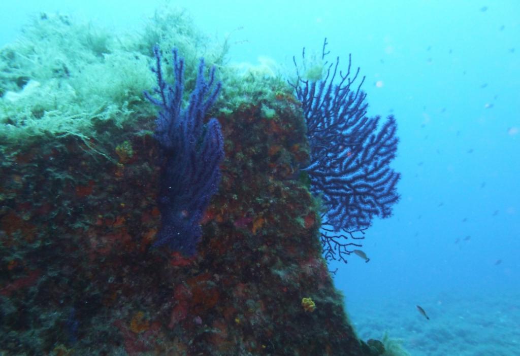 Portofino (Promontorio) Immersione presso il Dragone 2011-08-07