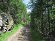 Strada militare all'inizio nel bosco