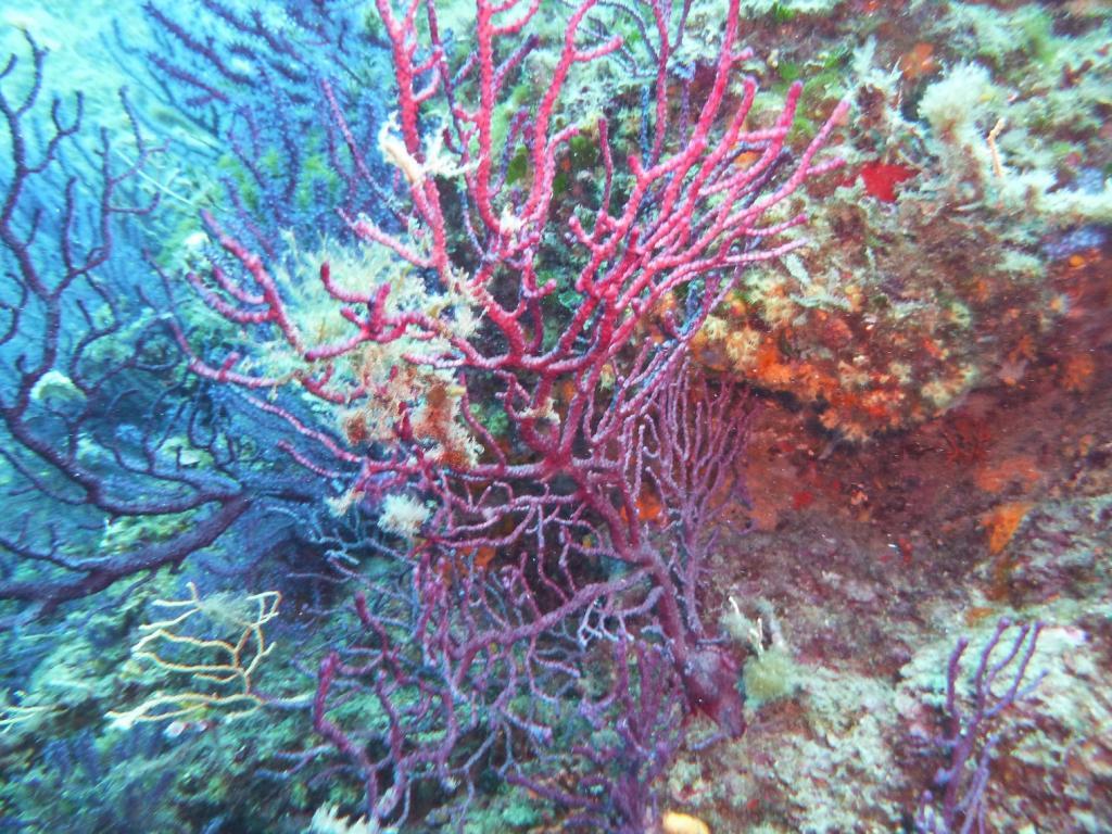 Portofino (promontorio) Immersione presso la Torretta 2011-08-10