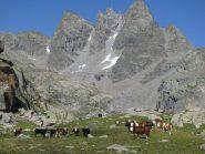 Alpe La Motta