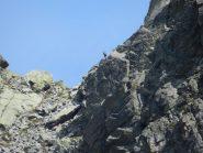 Stambecco in lontananza sul Passo di Oriaccia