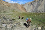 alcuni cavalli con i materiali di un altro gruppo in discesa verso Chakungtse (11-8-2011)