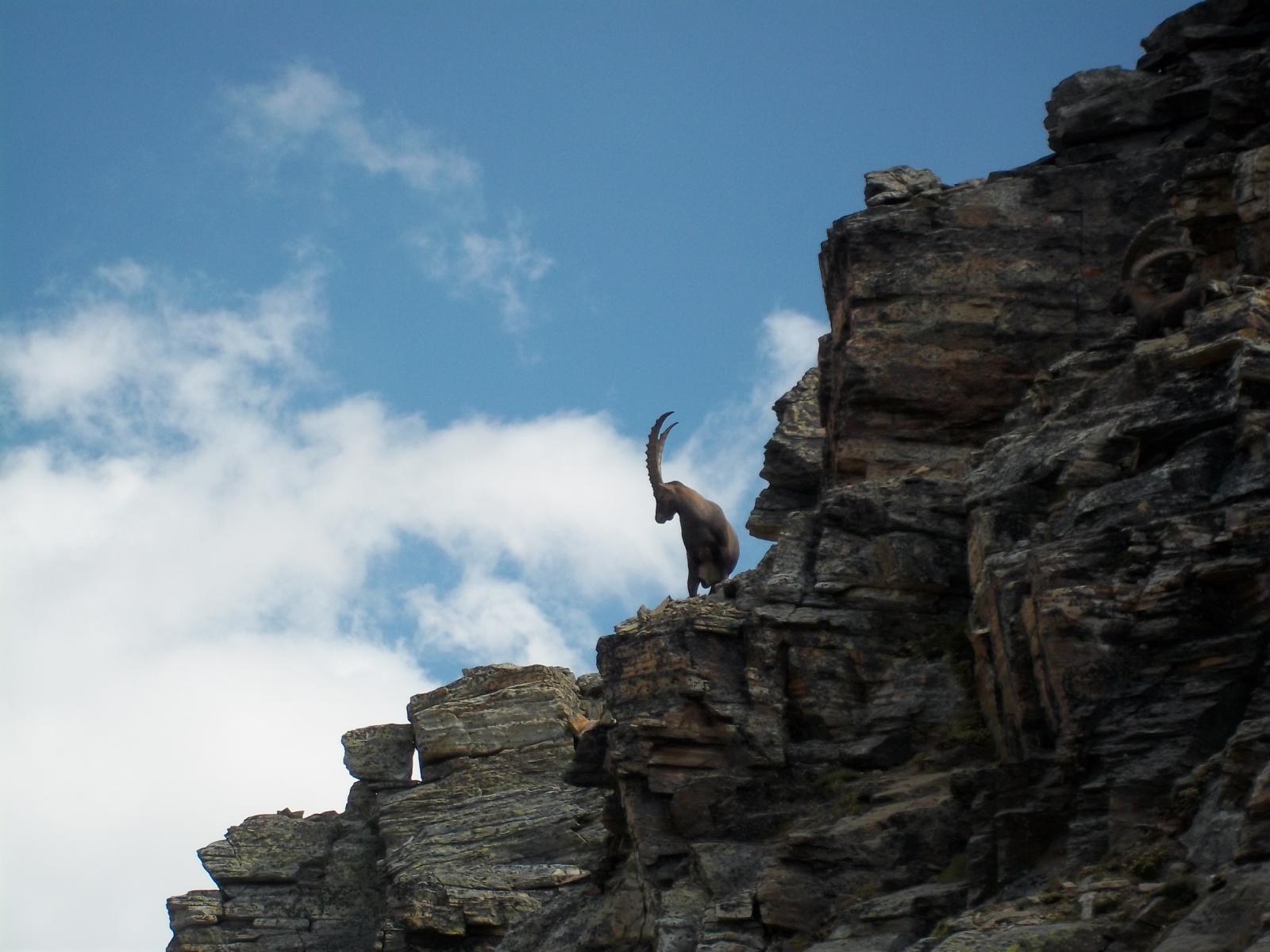Il signore della montagna!