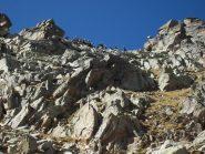 capre curiose su cresta quota 2951