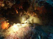 vermi di mare