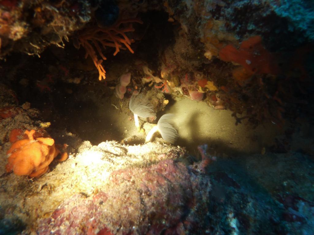 Portofino (Promontorio) Immersione presso la Testa del Leone 2011-10-02