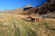 sentiero dopo le Chalet de la Rocheure