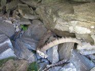 corna di stambecco vicino alla grotta