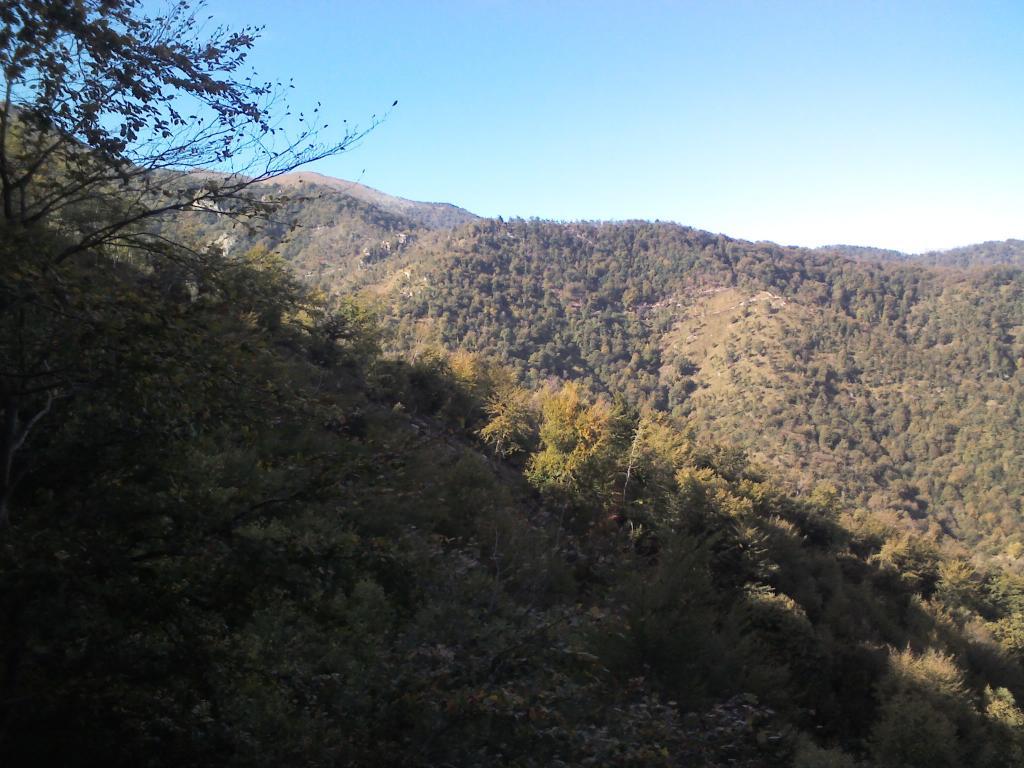 Prà l'Abbà (Colle) da Cumiana per la strada forestale Bastianoni 2011-10-12