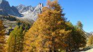 Meraviglioso autunno....