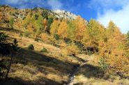 gli splendidi colori autunnali nel bosco sotto la Punta Vigeusaz (15-10-2011)