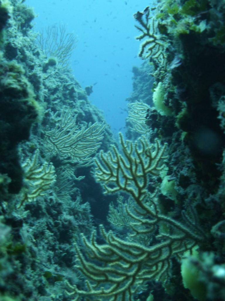 Portofino (Promontorio) Immersione presso la secca dell'Isuela 2011-10-16