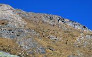 Camosci sui pendii di Cima del Rospo