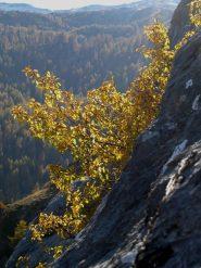 autunno in parete