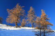 alberi con i colori autunnali appena sotto il Piano dei Serous (30-10-2011)