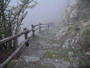 si entra nella nebbia