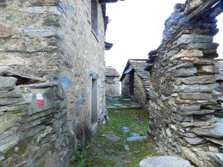 Il sentiero attraversa l'alpe Basseno