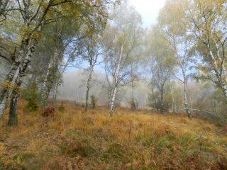 Il bosco dopo il rifugio Fantoli