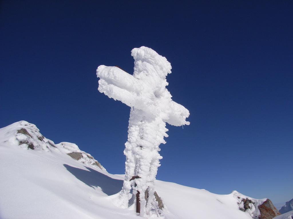inclinata verso il basso...il peso della neve