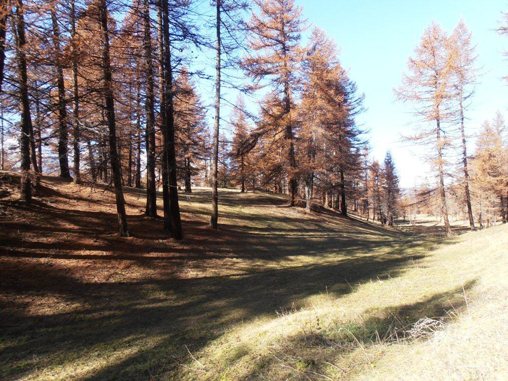 01 - nel bosco sopra Champas Seguin