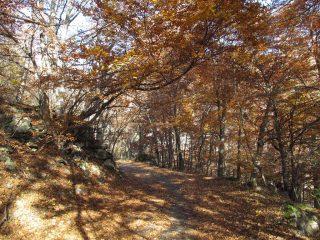 Il bosco e la strada si fondono insieme