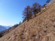 05 - uscendo dal bosco nella parte alta dlla cresta