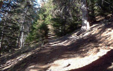 Il sentiero dopo Les Bornes.