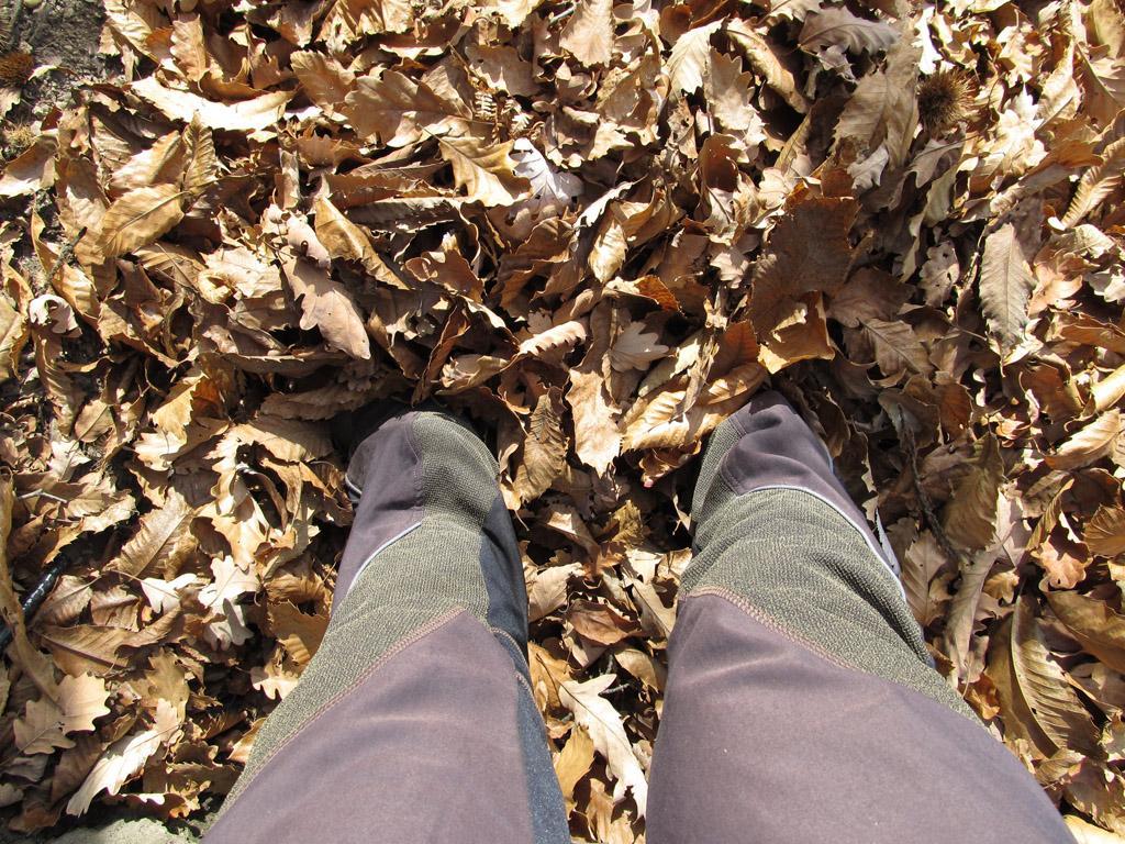 Un po' di foglie