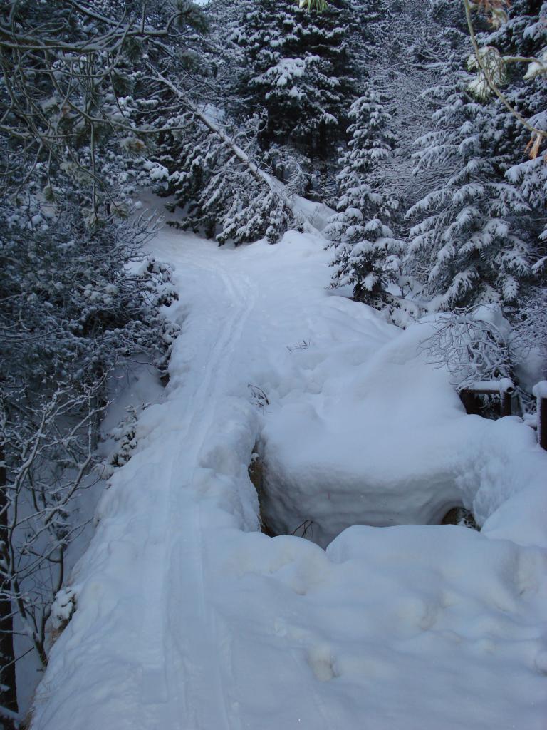 Un suggestivo ponte di neve nel bosco