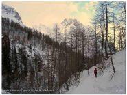 Nel bosco verso Alpe Devero