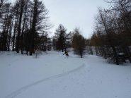 Nel bosco neve farinosa