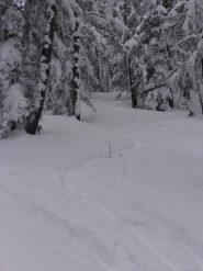 16 - scendendo nel bosco, dove è ripido si scia alla grande sulla farina