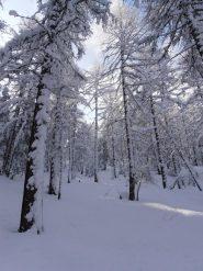 11 - bosco magico dopo la nevicata