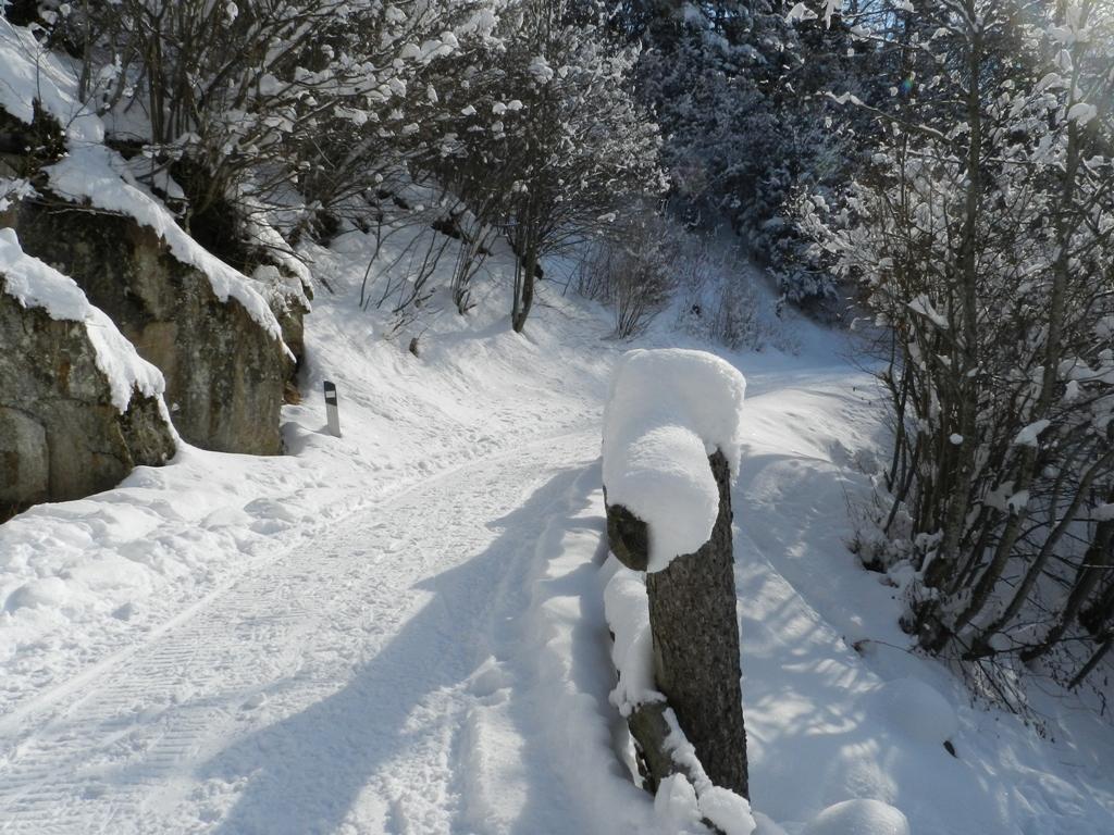 la strada forestale