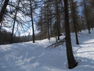 Nel bosco la neve migliore