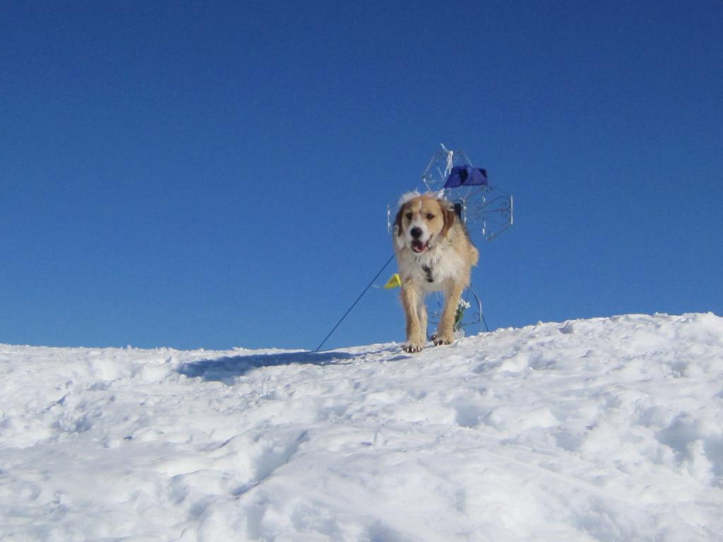 Rocky sulla prima punta da Sci Alpinista