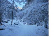 Alberi carichi di neve..