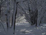 entrando nel bosco incantato