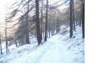 Il bosco al mattino..
