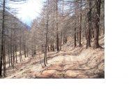 Il bosco al pomeriggio..