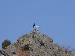 07 - Corvo di vetta in cima a Punta di Costafiorta