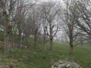 La baita di Case Bossola fa capolino tra gli alberi