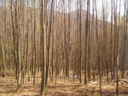 bosco fitto vicino alla Cascina
