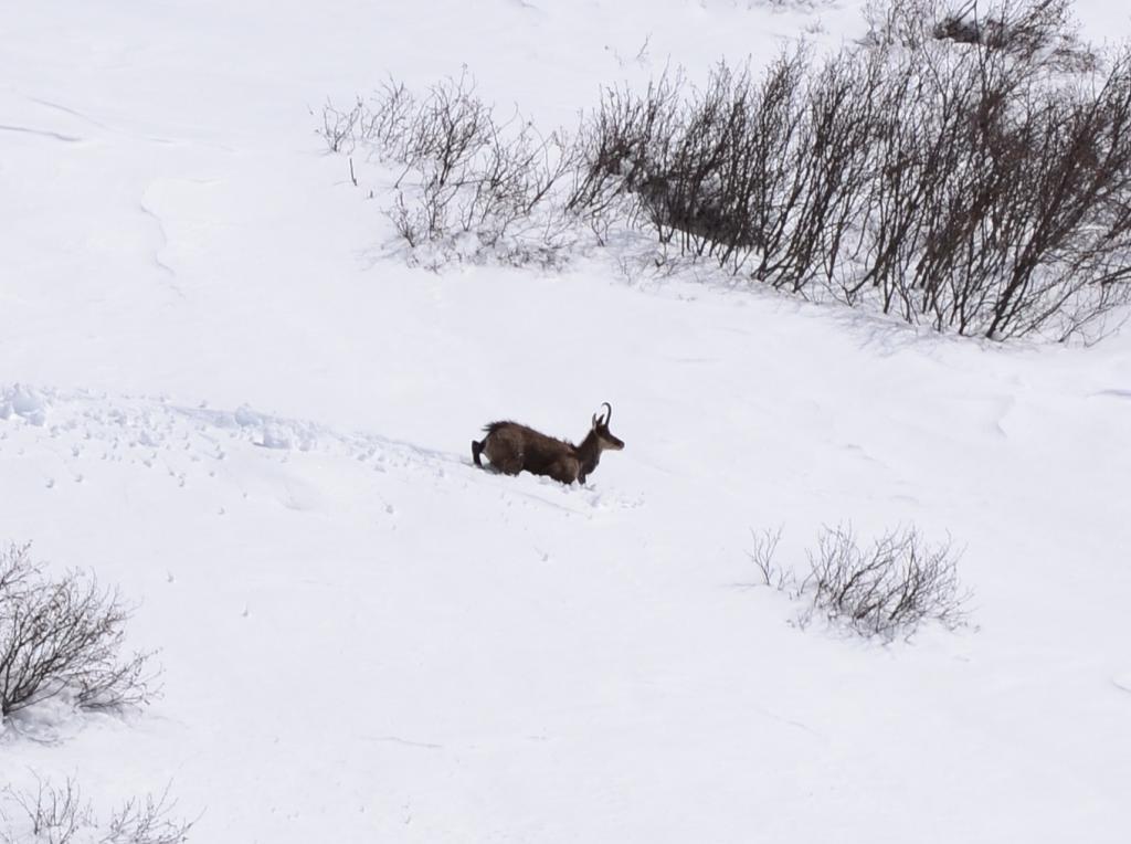 correndo nella neve