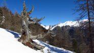 ambientino di salita, appena fuori dal bosco (21-4-2012)