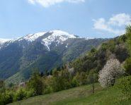 Pigna dalla Val Ellero(foto  2011)