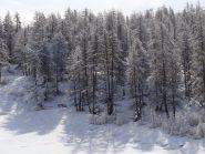 bosco con spruzzata di neve fresca