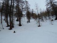 Nel bosco ancora bellissima neve