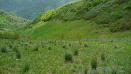 Il sentierino che dal colle della Gorgia scende al gias o C. della Presa