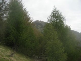 uscita dal bosco, monte Alom al centro della foto